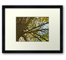 Fall 2012 Collection 8 Framed Print