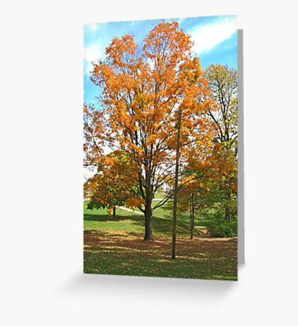 Fall 2012 Collection 10 Greeting Card