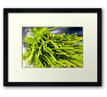 Green Herbs Framed Print