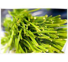 Green Herbs Poster