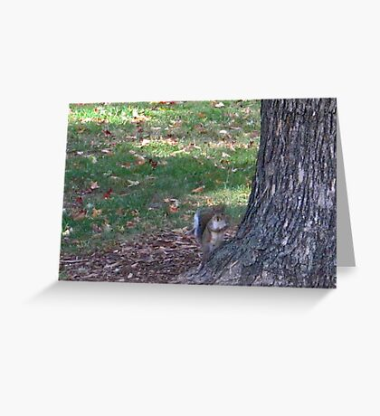 Fall 2012 Collection 14 Greeting Card