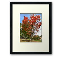 Fall 2012 Collection 21 Framed Print