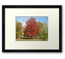 Fall 2012 Collection 26 Framed Print
