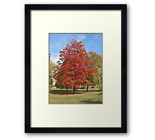 Fall 2012 Collection 28 Framed Print
