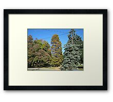 Fall 2012 Collection 38 Framed Print