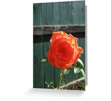 Fall 2012 Collection 40 Greeting Card