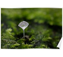 Droplet on a stick Poster