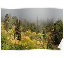 Foggy Hillside Poster