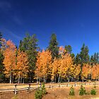 Buck And Rail Fence Running Through Fall Aspens - Panorama by A.M. Ruttle
