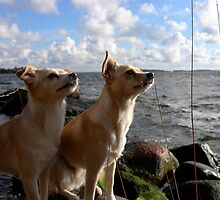 Dogs and clouds by KanaShow