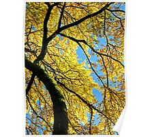 The Yellow tree Poster