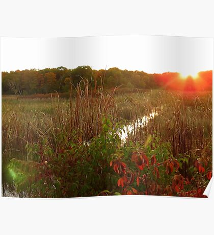 Sunrise at Beaver Meadows Poster