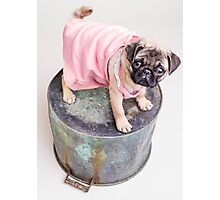 Pug Puppy in pink sun dress Photographic Print