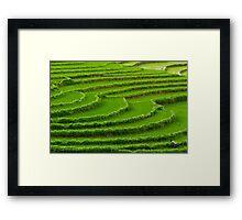 Green On Green Framed Print