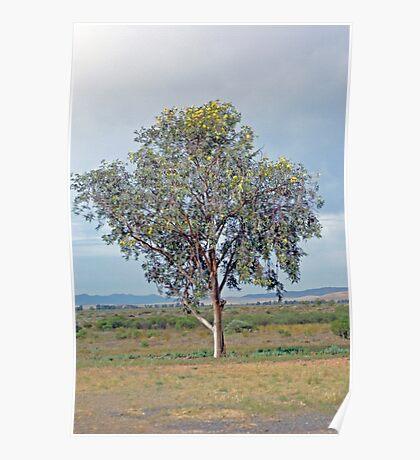 Lone Tree, Hawker Poster