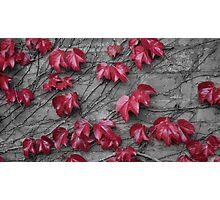 The Red Leaves Photographic Print