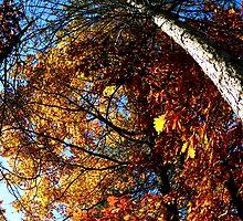 Oxford, MI | Autumn 6 by RJtheCunning