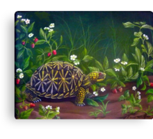 Florida Box Turtle, Strawberries and Blooms Canvas Print