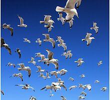 Flight by photogliveco