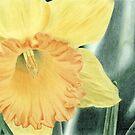 Daffodil Dayz by Jennie L. Richards