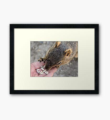Sunflower seeds for a friend Framed Print