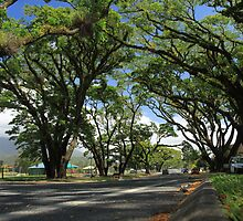 MCC Mossman Streetscape by Mossman  Community Centre