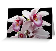 Orchid Family Tree? Greeting Card