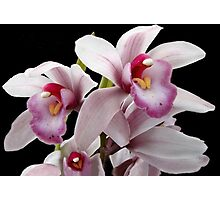 Orchid Family Tree? Photographic Print