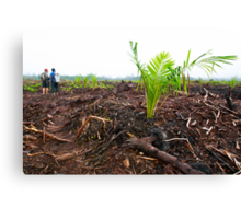 Young palm oil plant in Central Kalimantan  Canvas Print