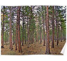 ponderosa trail Poster