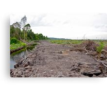 Young palm oil plant pulled from the ground.  Canvas Print