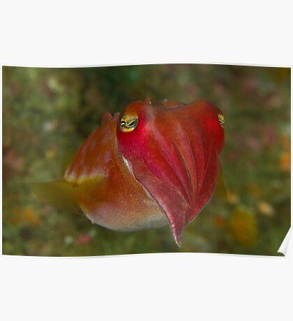 Pinnacle Cuttlefish Poster