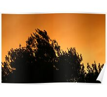 Olive Tree Silhouette At Sunset Poster