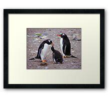 Gentoo Penguin Family Feeding Chick Framed Print