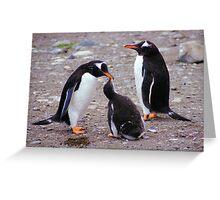 Gentoo Penguin Family Feeding Chick Greeting Card
