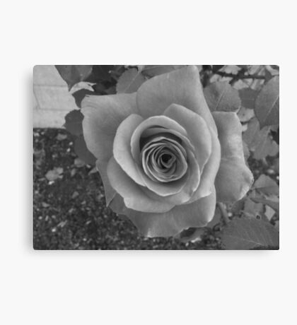 Rose- black and white Canvas Print