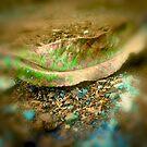 leaf matter by © Karin Taylor