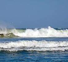 Surf and Gulls by Sue Robinson