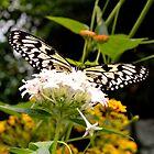 Butterfly by melek0197