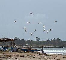 Cattle Egrets over Tanji Beach by Sue Robinson