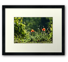 Green with red Framed Print