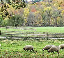 Fall on the Farm by Monnie Ryan