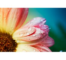 color flower 2 Photographic Print