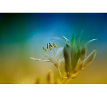 color flower Photographic Print