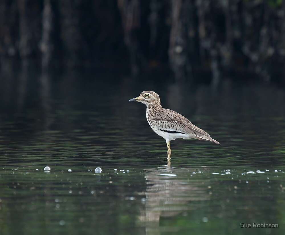 Senegal Thick-knee by Sue Robinson