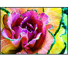 Pink Cabbage Photographic Print