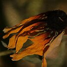 Exotic bird or dying flower? by Susan Littlefield