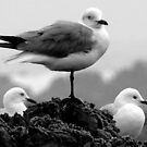 Three's a crowd by Anton Alberts