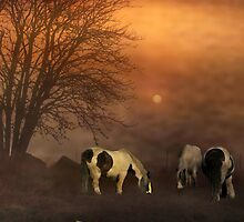 Horses in the Mist by Irene  Burdell