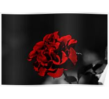 Selective Colouring - Red Rose Poster